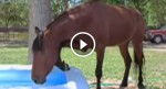 Horse sees a kiddie pool, but WATCH what the camera catches next!