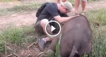 He sees this baby elephant lying on the ground alone. How the elephant reacts to him? WOW!