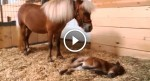 Everyone thinks it's a normal foal but when the camera zooms in—UNBELIEVABLE