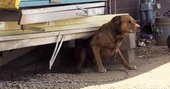 This Dog Was Chained Outside For 10 Years… But Watch What Happens When Someone Finally Noticed