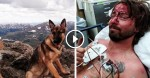 Lightning Strikes Hiker And Nearly Kills Him, But His Loyal Dog Saves His Life