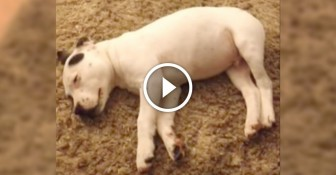 Dog Scares Himself Awake With His Own FART