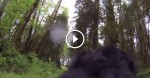 This Dog With A GoPro On Its Back Encountered Something Terrifying In The Forest