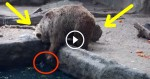 This Bear Spots A Struggling Bird In The Water. I Can't Believe What She Did Next