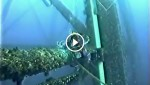 This Diver Was Working In The Deep Blue. He Never Expected THIS To Happen. What A Surprise!