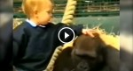 This Girl Goes To Pet A Gorilla. When She Does? I'm Awe-Struck.