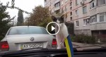This Cat Sees Windscreen Wipers For The First Time In His Life, His Reaction Will Make You Laugh