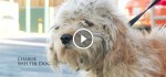 This Homeless Dog Went To The Groomer. What She Found Under All The Matted Hair Made My Eyes Well Up