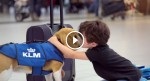 The Cutest Lost & Found Service: KLM Uses This Adorable Dog To Find The Owner