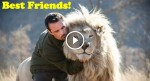 His Best Friend Is a Lion: Amazing Friendship Between a Man and Wild Lions!