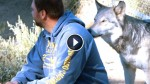 Veterans Suffering from PTSD are Healing Using Wolf Therapy! Incredible!