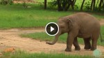 This Baby Elephant Met a Cat for The First Time. Now Watch What The Calf Did! Awww…
