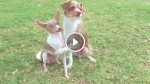 This Funny Trio of Dogs Have Learned Some Amazing Tricks And You Just Have To See Them!
