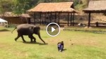 Check Out What This Elephant Did When She Thought Her Handler Is In Danger! This is Amazing!