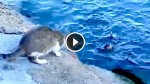 This Stray Cat Saw Something in The Water, And Seconds Later I Was Impressed! WoW