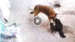 This Mother Cat Introduces Her Kittens To An Old Friend And What Happens Next is Just Amazing!