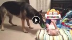 Dog Walks Up To Their Baby. What Happens Next Made Mom Run For The Camera