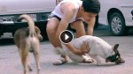 He Wanders The City Looking For Stray Dogs. What He Does To Them? You Have To See This!