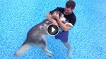 He Put His Sick, Old Dog In The Pool. When I Realized Why, My Heart Melted!