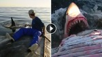 What's More Fun Than Surfing A Dead Whale? Doing It While Sharks Feast On It