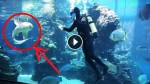 When This Shark Approached Diver In Aquarium, No One Expected THIS To Happen