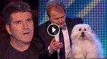 Can You Tell What's Different About This Dog? Probably Not, But It Left The Judges STUNNED!
