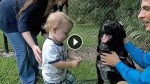 This Baby Couldn't Tell His Parents About His Abusive Babysitter …But Their Dog Could!