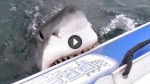 A Great White Shark Attacks An Inflatable Boat And It Starts To Sink. Now Watch What Happens Next!