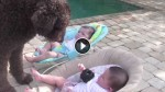Dog Walks Over To These Twin Babies. What Happens Next Made Mom Run For The Camera