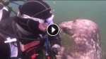 Diver Has An Unbelievable Encounter With A Friendly Seal. Their Bond Is Priceless!
