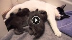 This May Look Like A Cat With Kittens, But You'll NEVER Guess What It Actually Is