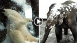 First Snow Day Of 2017 In Zoo Leads To Some Hilarious Activities. It's TOO Precious To Be Missed!