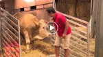 This abused bull has been chained his whole life. Now watch what he does to the man in red
