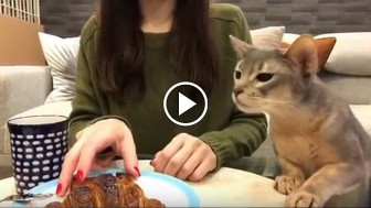 When This Cat Smells Food, It's a Helpless Situation. I'm CRYING!