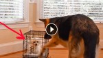 Her Puppy Kept Escaping, So She Set Up a Camera. What It Captured Is Just WOW!