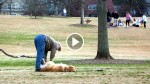 Camera Catches Man Doing Something Completely UNEXPECTED With The Dog. Wait Till You See Why…