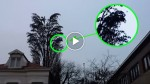 That's NOT a normal tree! You won't believe what this man caught on video