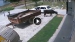 Thieves Will Steal Anything These Days …Including COWS! This Is So Messed Up