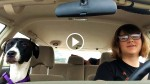 Honey The Dog Quietly Rides In The Car, Until Mom Puts On His Favorite Song. This Is HYSTERICAL!