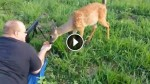 Deer Walks Up And Licks The Barrel Of The Gun. This Will Melt Even a Hunter's Heart!