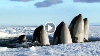 This 2-Minute Video Is The Best Thing I've Ever Seen About Nature. I Could Rewatch It Endlessly!