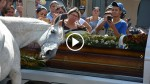 Grieving Horse Gets Close To His Human Friend's Coffin And His Reaction Brought Everyone To Tears