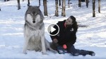 Giant Wolf Sits Down Beside This Woman, But Watch What Happens When They Make Eye Contact