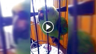 Parents Bring A Newborn Baby Home, Then They Notice Their Parrot Started Acting Weird…