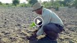 Man Plants Trees In Same Spot Every Day. 38 Years Later, You'll Never Believe What He Created