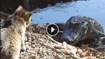 Cat vs. Alligator – Who Will Win?