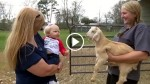 Baby Sees A Tiny Goat For The First Time. What Happens Next Will Leave You In Stitches!