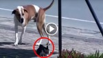 Dog Finds An Injured Cat On The Street And Immediately Gets Help!